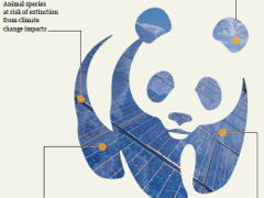 WWF's Perspective on Climate Change